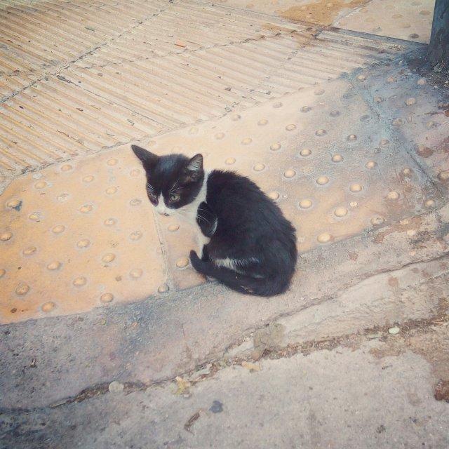 Ένα γατάκι τού δρόμου. A street kitten.