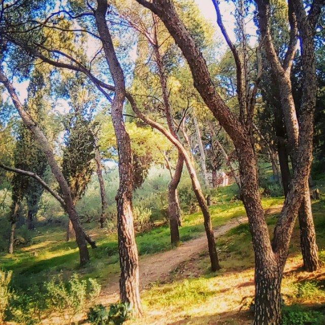 Το δάσος τού Λόφου Λυκαβηττού. The Lycabettus Hill forest.
