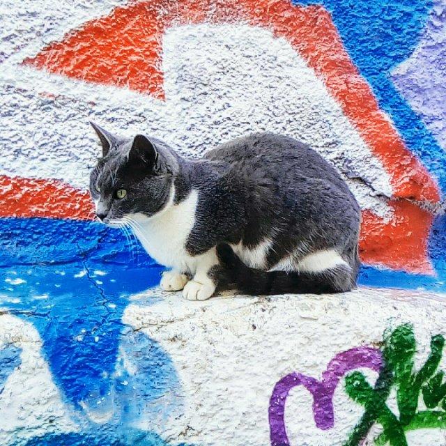 Μια γάτα του δρόμου - A street cat