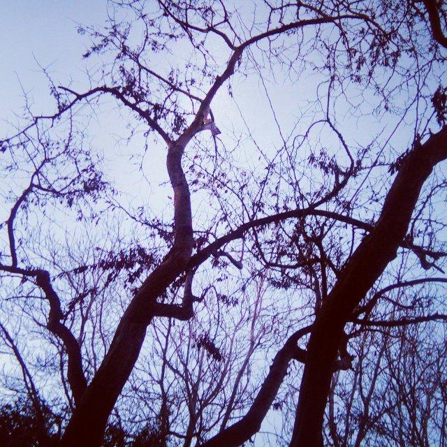 Διακλαδώσεις - Branching and Networking