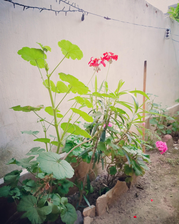 Στό βάθος κήπος - The backyard garden