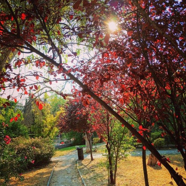 Τα χρώματα τής φύσης - The colors of nature