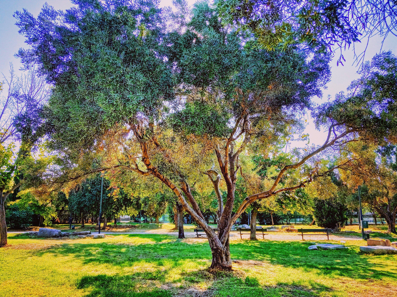 Ιμπρεσιονισμός στό πάρκο - Impressionism in the park
