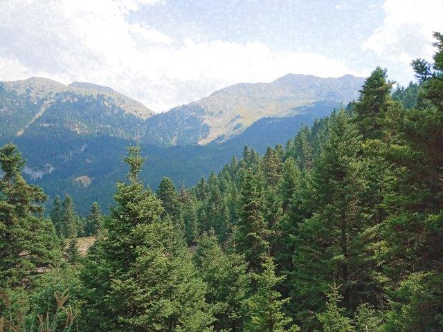 Οι κορυφές και το δάσος της Γκιώνας - The top of the mountains and the forest