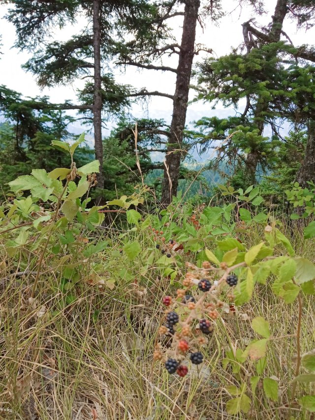 Φρούτα τού δάσους - Forest fruits