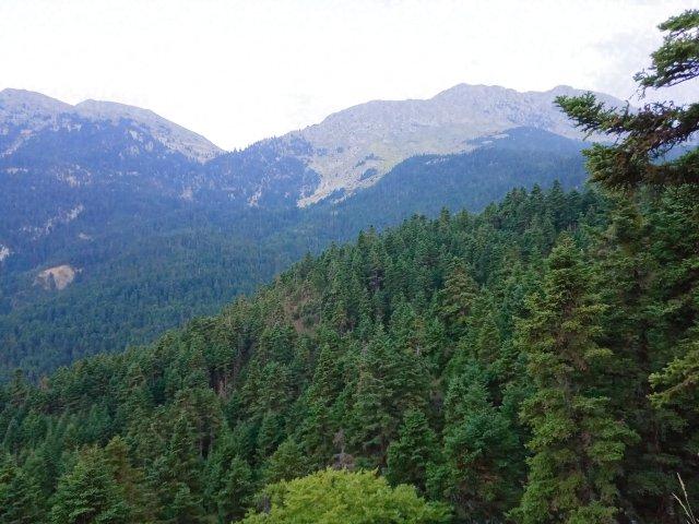 Το δάσος της Γκιώνας - The mountain forest