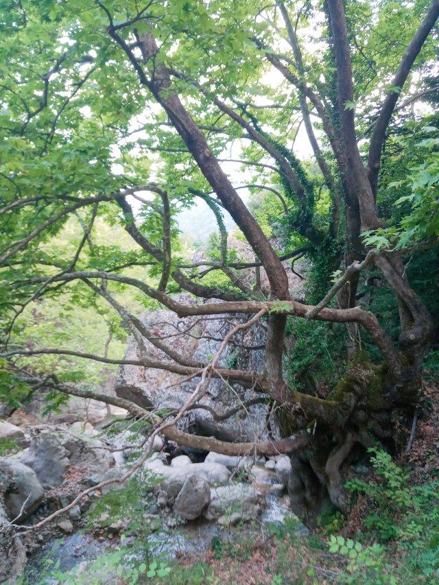 Φυσικό Πάρκο Καστριώτισσας Φωκίδας - Natural Mountain Park