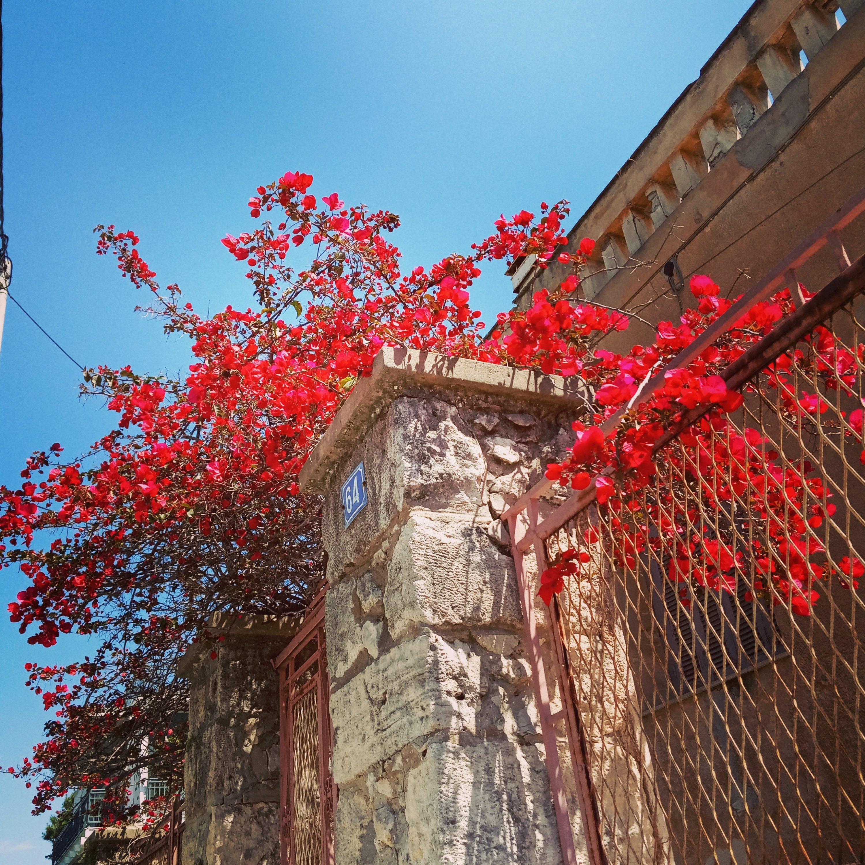 Η άνοιξη στον Λόφο Σκουζέ - The spring in Athens