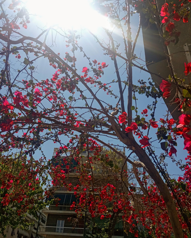 Η άνοιξη στον Κολωνό - The spring in Athens