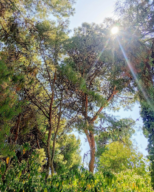Η άνοιξη στον Λόφο Κολωνού - The spring in Athens