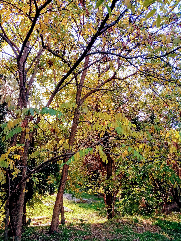 Φθινόπωρο στο πάρκο Ακαδημίας Πλάτωνος