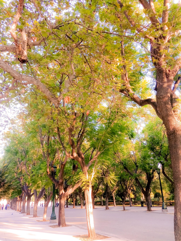 Ζάππειο Κήπος